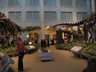 At the Carnegie Museum of Natural History